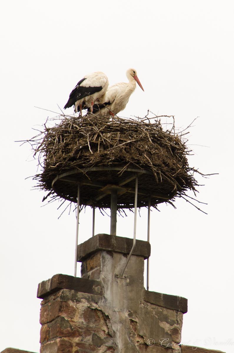 storks alsace