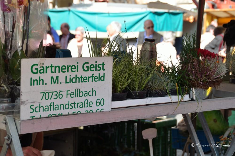 Markt - Gärtnerei Geist